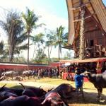 Indonésie - Toraja - 082