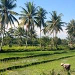 Indonésie - Lombok - 371