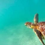 Mexique - On a nagé avec les tortues à Akumal !