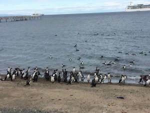Chili - Punta Arenas - 006