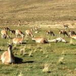 Chili - Toerres Del Paine - 0274