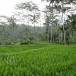 Indonésie - Ile de Bali